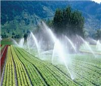 «الري»: زيادة المساحات المنزرعة بالأرز لمليون و76 ألف فدان