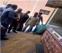 توريد 33 ألف طن من محصول القمح بمحافظة المنوفية