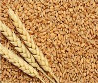 توريد 1.3 مليون أردب من القمح لصوامع وشون الشرقية