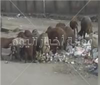 فيديو | بعد انتشار القمامة بها أهالي منطقة «حدائق القبة»: أين رئيس الحي ؟