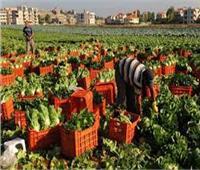 385 مليونا و600 ألف دولار صادرات الإسماعيلية الزراعية خلال 4 أشهر