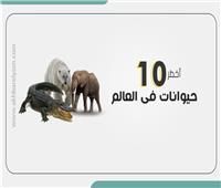 إنفوجراف | أخطر 10 حيوانات فى العالم