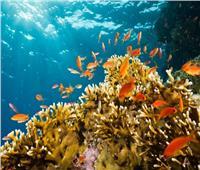 خاص| وزارة البيئة: «المحميات الطبيعية» أهم أدوات حماية البيئة البحرية