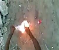 «قطة طنطا».. دهستها سيارة وحرقها طالب بالإعدادية