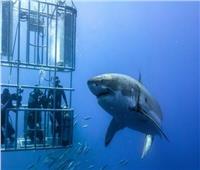 بالصور|استمتع بمغامرة السباحة وسط «أسماك القروش » في تلك الشواطئ