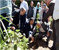 بدء تنفيذ مبادرة «اغرس شجرة مثمرة» بمدارس وميادين الشرقية