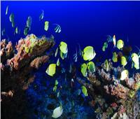 خاص| وزارة البيئة توضح شروط حماية «البيئة البحرية» في مصر