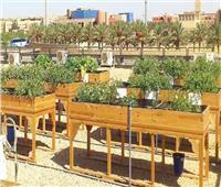 محافظة القاهرة توافق على تبني مبادرة زراعة أسطح مباني المصالح الحكومية