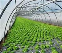 خبير: مصر تشهد طفرة اقتصادية بسبب زيادة الصادرات الزراعية والصناعية