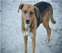 قرار بمنع دخول الكلاب المصرية إلى أمريكا