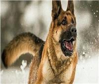حبس خفير «فيلا التجمع» 6 أشهر بواقعة هجوم كلبين على ضابط شرطة