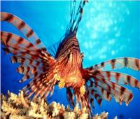 باحث بيئي: سبب ظهور أسماك في بعض الشواطئ خوفا على أجنتها