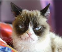 بسبب عدوى المسالك البولية.. وفاة أشهر قطة في العالم