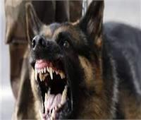 كلب مسعور يعقر 4 أشخاص في البحيرة