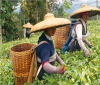 البنك الدولي يمنح مالاوي 95 مليون دولار للمشروع الوطنى للتجارة الزراعية