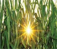 توصيات للتعاملمع المزروعات خلال الموجة الحارة