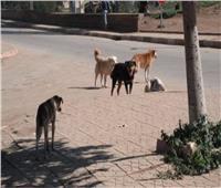 غدا.. «الإدارية» تصدر قرارا هاما بشأن قتل الكلاب والقطط وتصدير لحومها