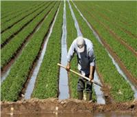 أمين عام الفلاحين: الحكومة حريصة على تطوير زراعة وإنتاج السكر