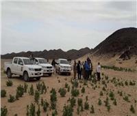 الزراعة تواصل مكافحة الجراد الصحراوي بأسوان وعلى الحدود السودانية
