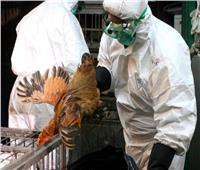 الزراعة تحيل ملف قرض البنك الإسلامي المخصص لمكافحة «انفلونزا الطيور»للنيابة