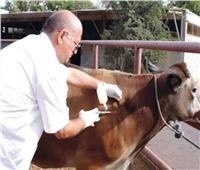 الزراعة: تحصين 2 مليون رأس ماشية ضد الأمراض الوبائية