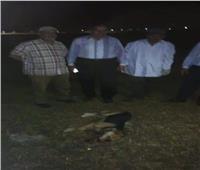 إعدام كلب «مسعور» عقر 12 فردًا بالمنوفية