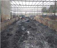 مصرع 3 مواطنين وإصابة 4 آخرين في حريق 4 حظائر ماشية بالفيوم