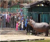 حديقة الحيوان بالجيزة تستقبل 22 ألف زائر حتى ظهر أول أيام العيد