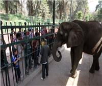 رئيس حدائق الحيوان : 75 ألف زائر لحديقة حيوان الجيزة في أول أيام عيد الفطر
