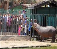 10 آلاف زائر لحديقة الحيوان بالإسكندرية خلال أول أيام العيد