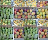 أسعار وأنواع المانجو في سوق العبور مع ثالث أيام عيد الفطر