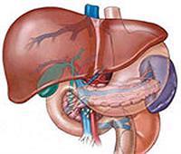 فيديو| تعرف على طرق اكتشاف مرض «الكبد الدهني»