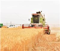 «صوامع وشون أسوان» تستقبل 71 ألف و132 طنا من القمح