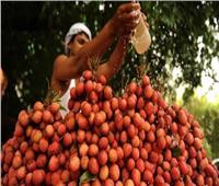 فاكهة قاتلة في الهند تصيب الأطفال بمرض نادر يؤدي للوفاة