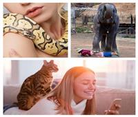 تقاليع| «مساج» بالأفاعي والقطط والفيلة لعلاج آلام الظهر