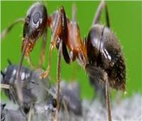 صور| تعرف على أخطر 4 حشرات مميتة في العالم