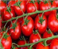 لانخفاض سعرها بشكل مبالغ.. «الزراعة» تنفي إصابة الطماطم بأمراض سرطانية
