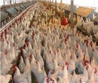 فيديو| الزراعة: جميع الجهات والمؤسسات مسئولة عن تطبيق قانون حظر تداول الطيور الحية