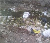 «القمامة» والكلاب الضالة تهدد سكان شارع صابر باشا