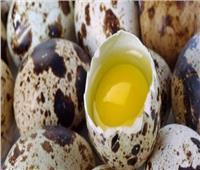 رغم صغر حجمه «بيض السمان» فوائد لا تحصى