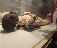 حكايات| سر الغاز.. كيف تنقل مصر مومياوات ملوكها «دون خدش»؟