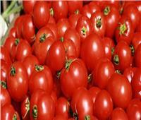 الحكومة تكشف أسباب انخفاض أسعار الطماطم