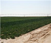 «البحوث الزراعية» تكشف انجازات مشروع الـ 20 الف فدان بغرب المنيا