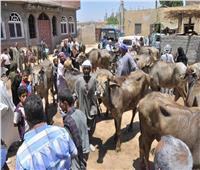 حملات لتحصين الماشية ضد الحمى القلاعية بأسيوط