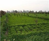الزراعة: تخصص 2607 فدان لإقامة 612 مشروعا نفع عام بالمحافظات