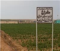 الزراعة تصدر تقريرا حول تجربة ترشيد استخدام المياه بمشروع غرب المنيا