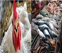 استقرار في أسعار الدواجن والأسماك بالأسواق