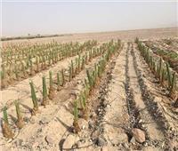 «الزراعة» تشكل لجنة للتنمية الزراعية المتكاملة في سيناء