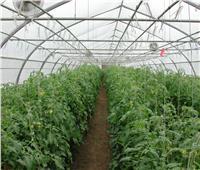 بالتفاصيل| تعرف على حجم التعاون الزراعي بين مصر وتنزانيا