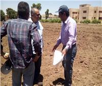 صور| «الزراعة» تطلق مشروعًا لإنتاج هجن الذرة الرفيعة البيضاء